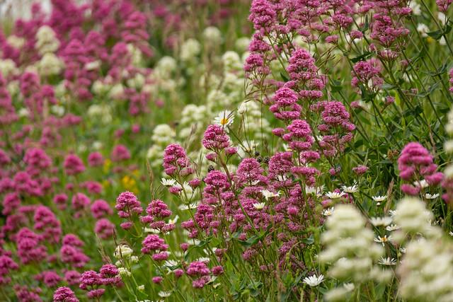Hillside Bloom