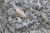 White Ermine by Will_wildlife