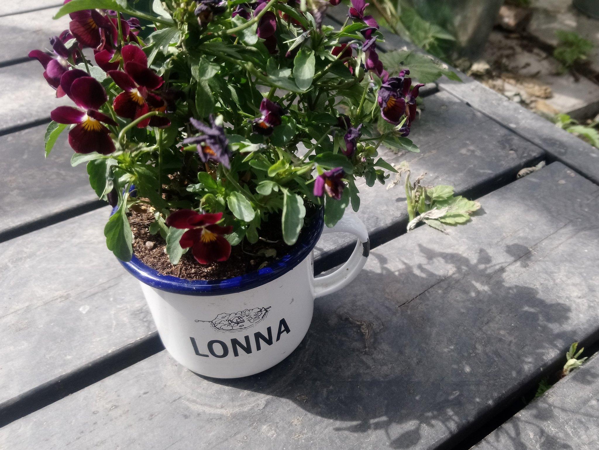 lonna-ikkunalla-blog8