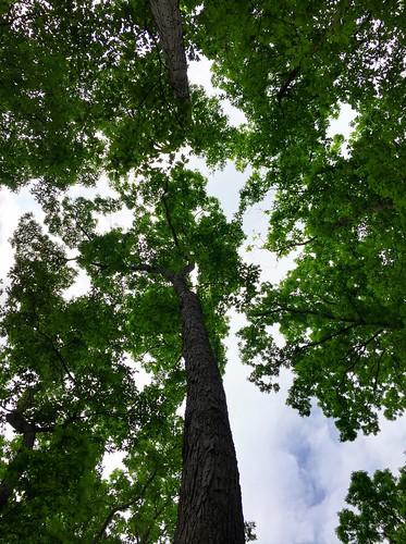 tree sky summer