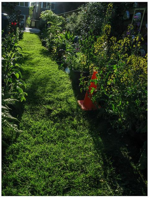 Side Garden with Sun