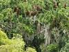 Tikal, barevná džungle všude kolem, foto: Petr Nejedlý