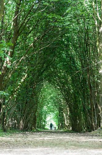 light nature belgium belgique brussels bruxelles forest tunnel tree trees contrast d90 dof dephtoffield mygphotographiewixsitecommyg2017 myg 2018