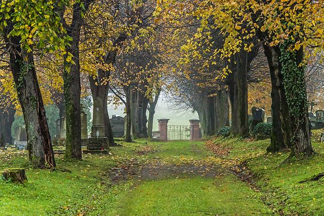 Autumn mystery | Zlaté Hory | Czech republic