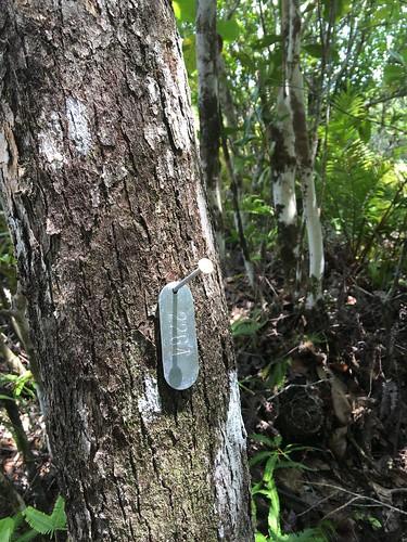 Thu, 08/25/2016 - 11:15 - Ngardok Nature Reserve, Palau