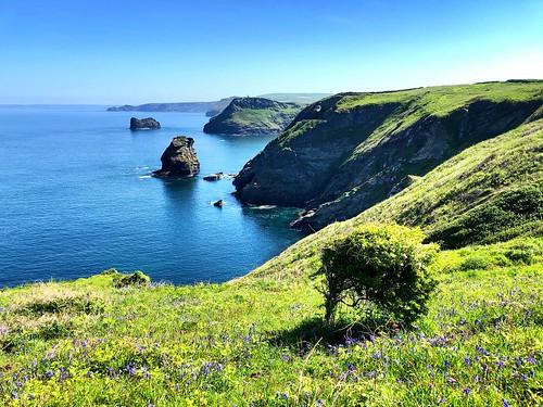 landscape travel walking cliffs sunshine bluebells green blue trees sea ocean flowers uk england southwestengland coastpath coast countryside aonb cornwall