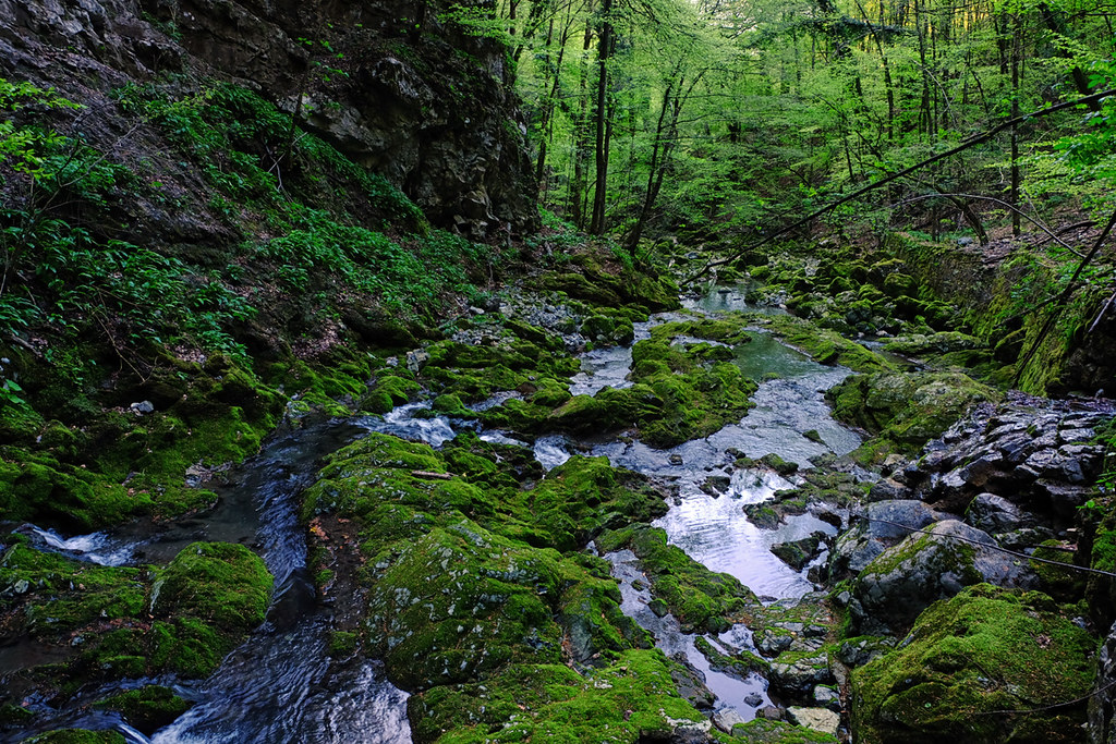 Zeleni Vir Creek in Gorski Kotar Region