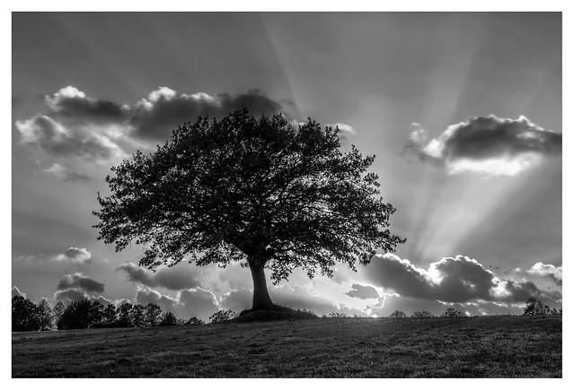 Tree and light