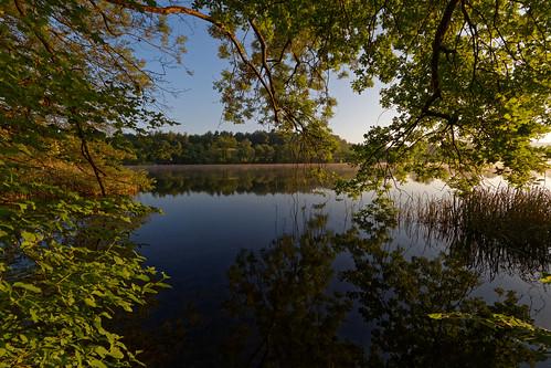 trees forest water surface mirror lake reflection morning sunrise katzensee zurich switzerland