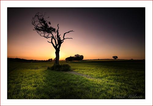 rihannatree sunset field tree belfast bangor rihanna shadow landscape northernireland silhouette