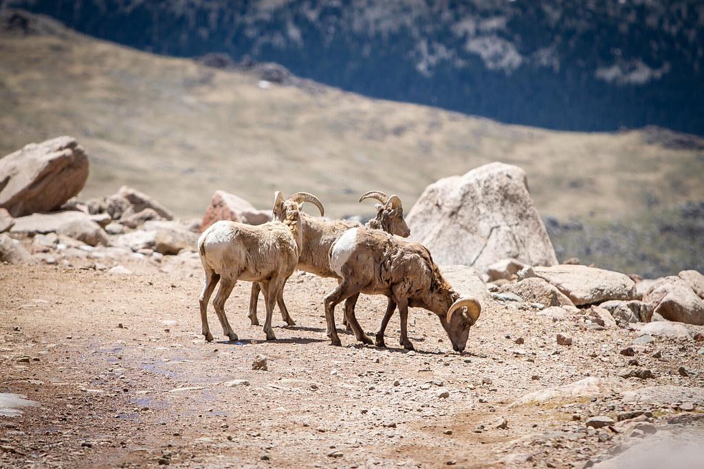 Summer Mount Evans Colorado-486.jpg