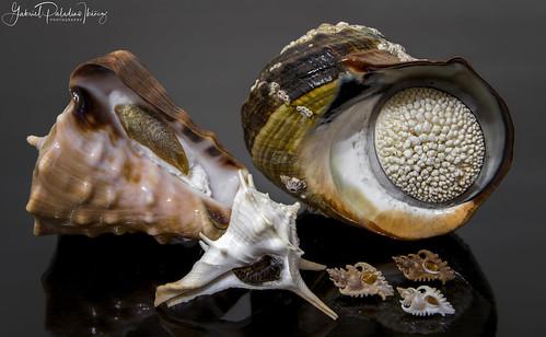 African seashells | by Gabriel Paladino Photography