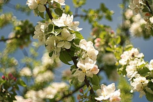 Bokeh meets Blossoms