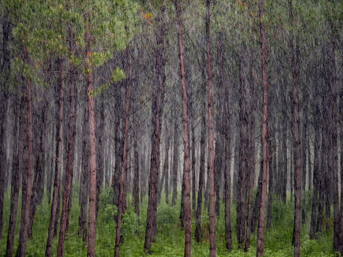 Forest Rain | by Paul Kaye