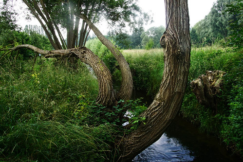 arbre bièvre paysage igny