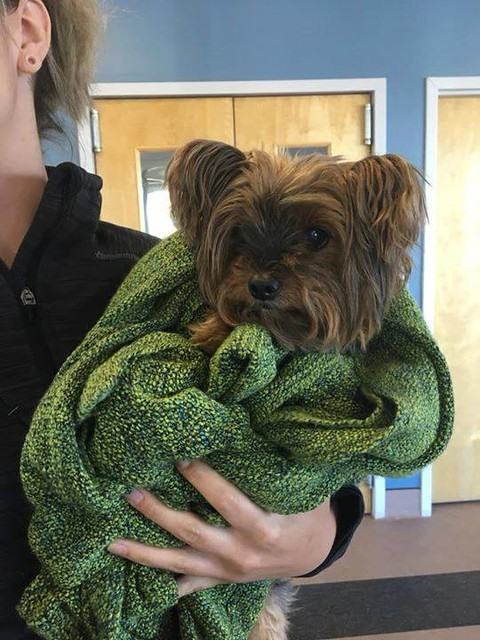 FOUND: Yorkie type dog in #HuntingtonHills. Now at McKnight Vet. Possibly named Peewee. Pls RT, Share to help find owner! YYC Pet Recovery shared Renée Percy Beanlands's post. Found this morning around 7815 Hunterquay Rd. Just dropped HIM off at McKnight