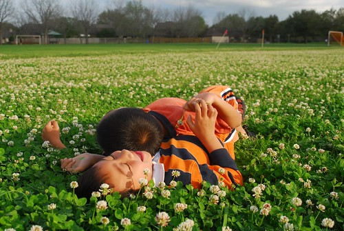 flowers colors children fun spring texas outdoor colourartaward
