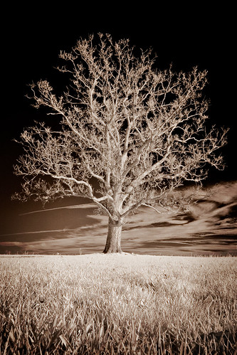 blackandwhite bw tree landscape ir infrared lone portfolio lonetree ir10d