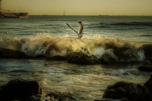 sea seagull tides sunset
