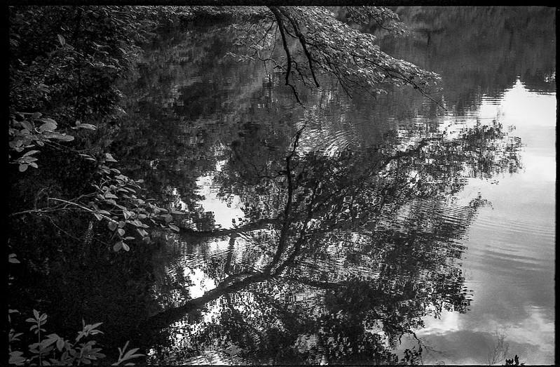 water, overhanging branches, reflections, The Lagoon, Biltmore Estate, Asheville, NC, Kodak Retina IIIc, Arista.Edu 200, Ilford Ilfosol 3 developer, 5.23.18