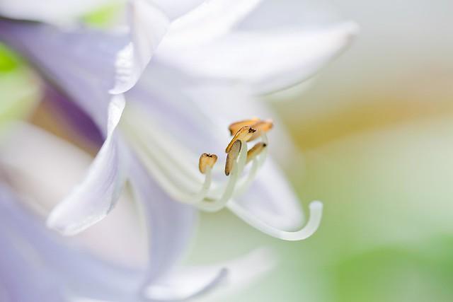 silky_gloss_blossom