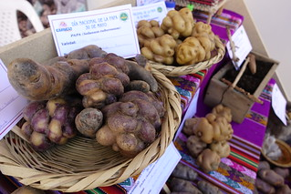 Native potato varieties on display at the World Potato Congress 2018. Photo: H.Holmes/RTB | by rtb_cgiar