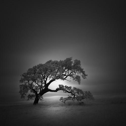 ir infrared nlwirth yup oak tree landscape rushcreek novato california blackandwhite