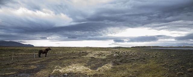 Islanda - Cavallo solitario