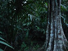 Tikal, prales před setměním, foto: Petr Nejedlý