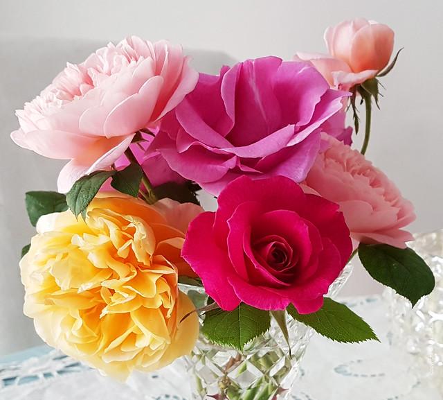 June Roses in my garden EXPLORED
