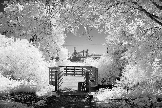 Mill race park - infrared - HFF!