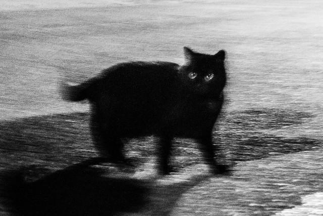 Le chat, la nuit