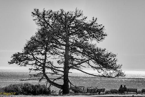 couple ocean tree blackandwhite