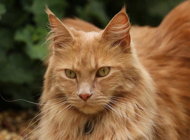 IMG_4690 neighbour's cat