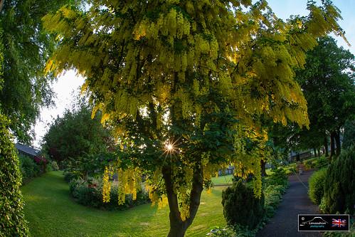 waddington sunset trees lancashire photography