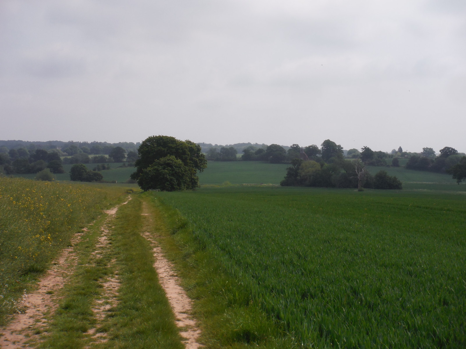 Into the Wid Valley SWC Walk 158 - Ingatestone to Battlesbridge or Wickford