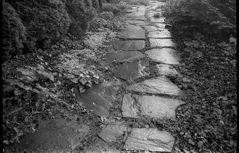 stone walkway, wet, rain, groundcover, conifer shrubs, yard, West Asheville, NC, Kodak VR35 K12, Kodak TMAX 400, Ilford Ilfosol 3 developer, 5.23.18