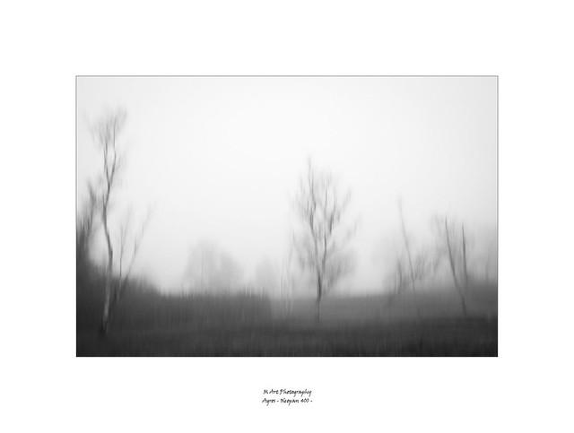 devant le brouillard dans le marais