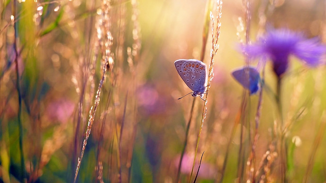 In a field of gold