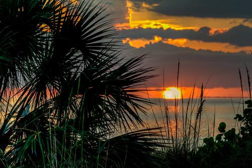 sunset florida gulf coast water ocean palm tropical floridasunset fl fla emersonpoint palmettoflorida