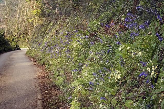 Springtime in Cornwall – roadside flowers