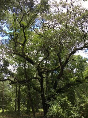 ©lancetaylor posrus florida leoncounty countypark