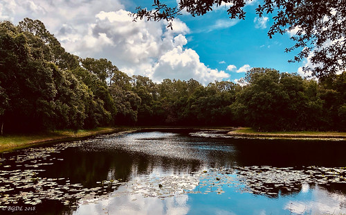 no6365~2018 iphone8plus bgdl landscape lakewoodranch florida unitedstates us lake woods theendof