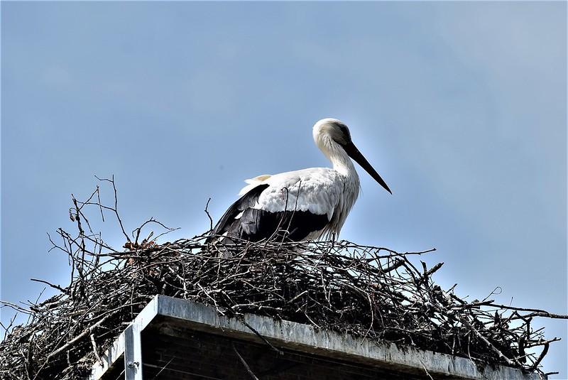 Storks 10.06 (8)