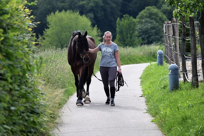 Horse 29.05 (2)