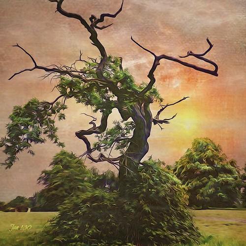 tree alive arborealart jan130 suttonpark suttoncoldfield westmidlands englanduk texture lenabemanna s