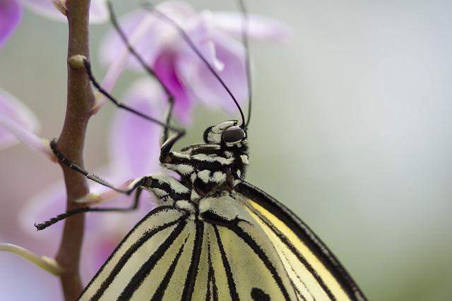Butterfly Center_39