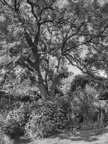 mono tree iphone 645pro light shade shadow htmt