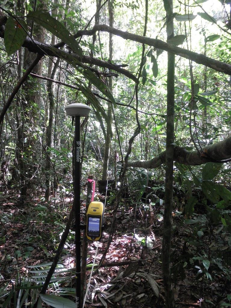 LiDAR-jungle-Mayan-Yucatan-Guatemala