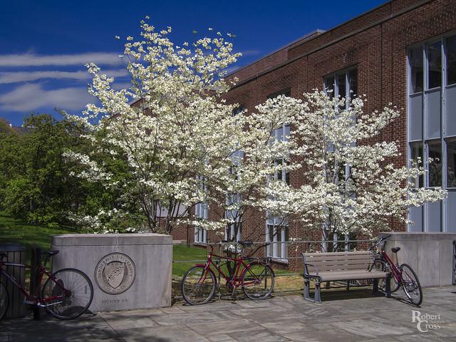 A Vanderbilt Spring
